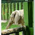 壽山動物園 (67)