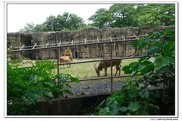 壽山動物園 (68)
