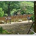 壽山動物園 (70)