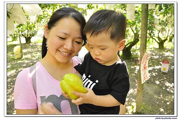 卓蘭大自然農場採楊桃 (17)