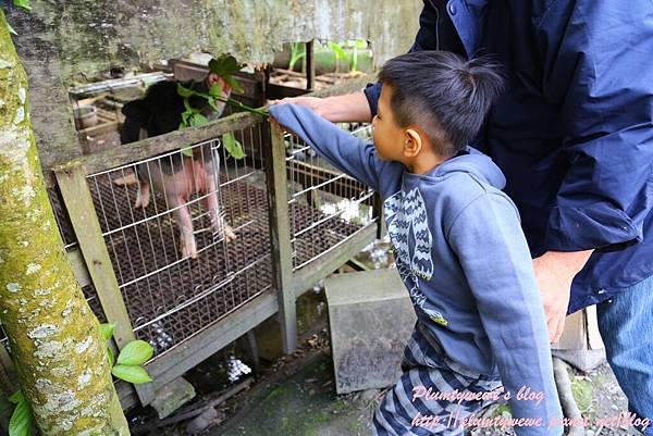花泉農場-5小動物近距離接觸 (19).JPG