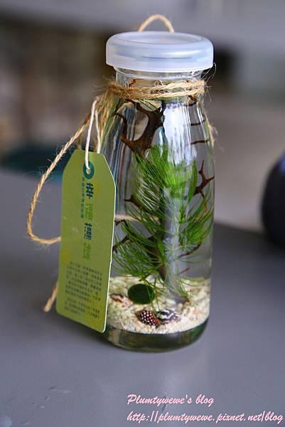 勝洋水草-1幸福藻球DIY (19).JPG