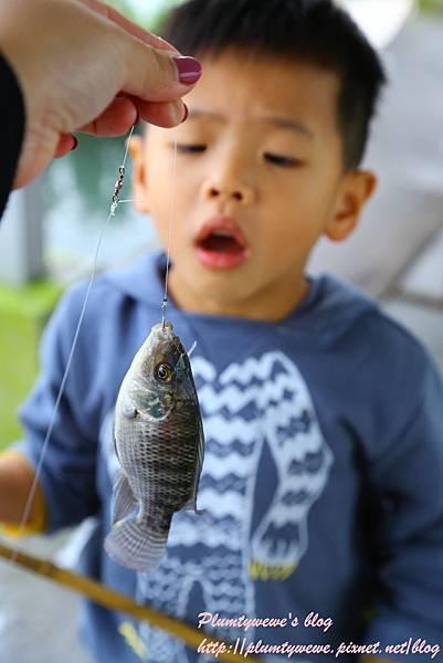 勝洋水草-2釣魚體驗 (18).JPG