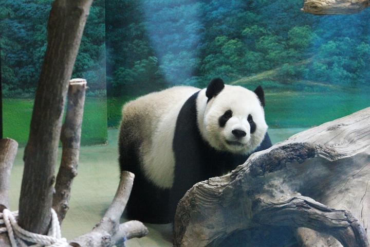 台北市動物園