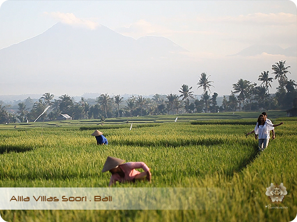 ALILA VILLAS SOORI All About Rice