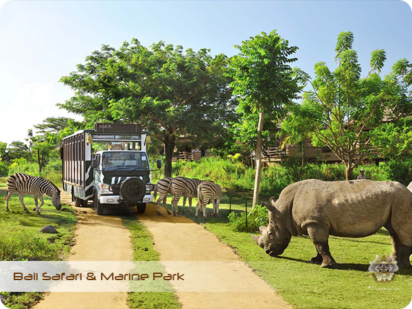 Bali Safari & Marine Park Safari Journey.jpg