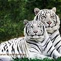 Bali Safari & Marine Park Ranthambore.jpg