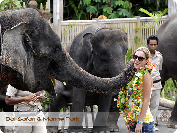Bali Safari & Marine Park Animal Attraction.jpg