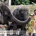 Bali Safari & Marine Park Animal Attraction.jpg
