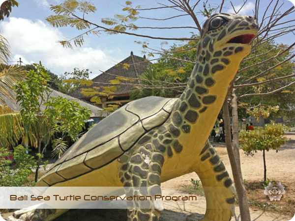 Bali Sea Turtle Conservation Program2.jpg