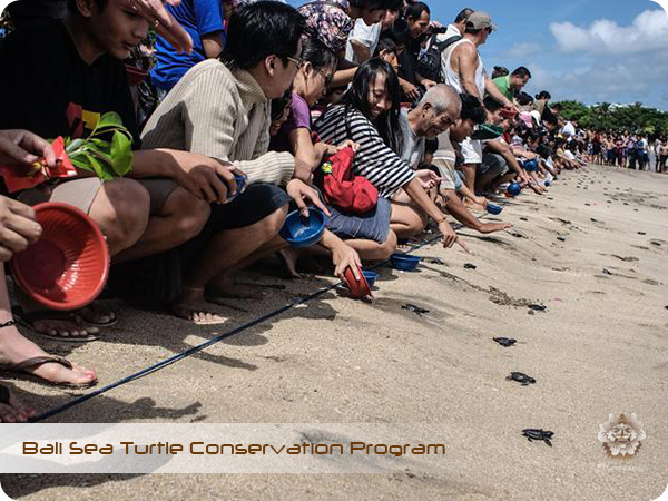 Bali Sea Turtle Conservation Program8.jpg