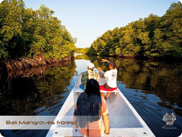 Bali Mangroves Forest.jpg