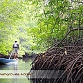 Bali Mangroves Forest Ship.jpg