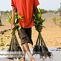 Bali Mangroves Forest Care.jpg