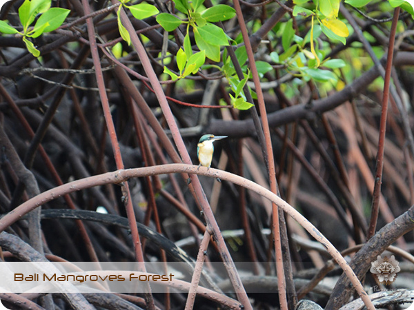Bali Mangroves Forest Bird.jpg