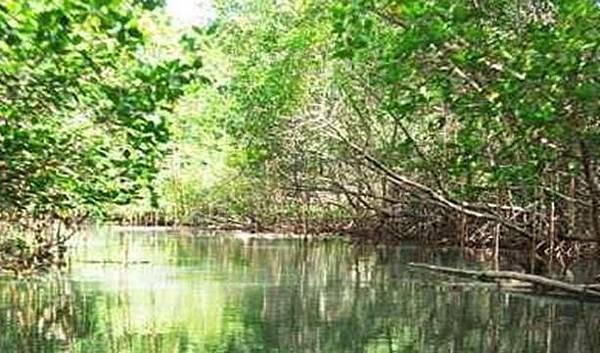 巴里島藍夢島紅樹林小艇