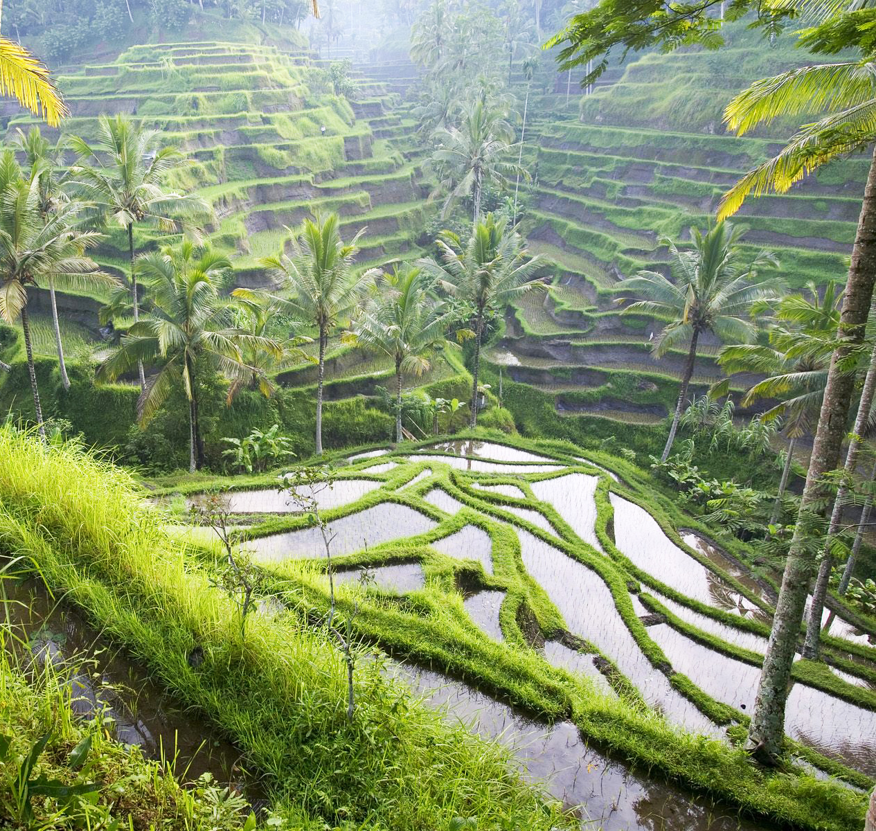 Terraced_Rice_Paddies_Ubud_Area_Bali_Indonesia[1].jpg