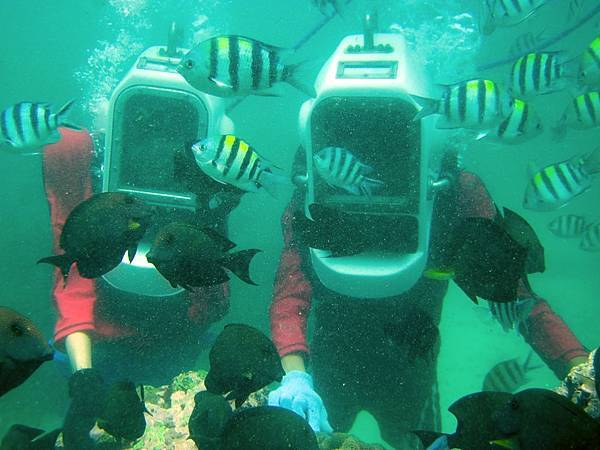 Coral Plantation.jpg
