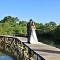 mangrove10.jpg