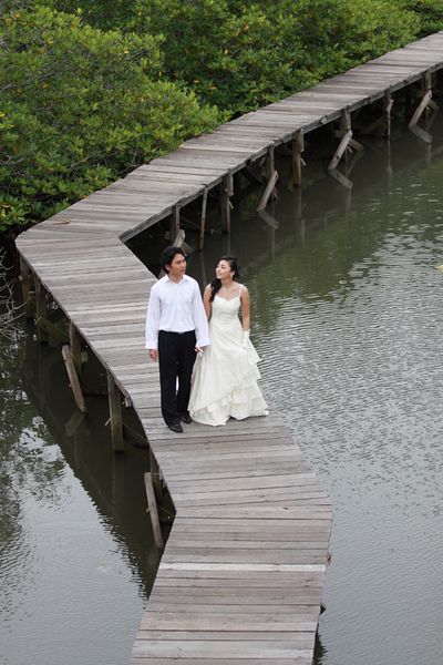 mangrove14.jpg