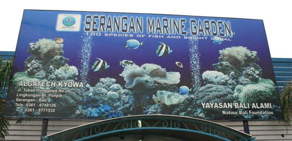 Bali 寧靜海海生館