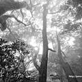 高聳的樹(觀音山硬漢嶺).jpg