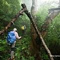 走路不止要看地上 還要注意頭別撞到倒下的樹(觀音山硬漢嶺).jpg