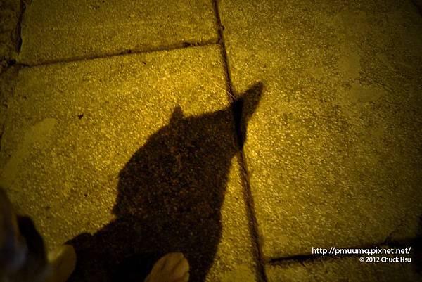 每一隻貓的影子裡都藏着黑暗騎士蝙蝠俠的魂
