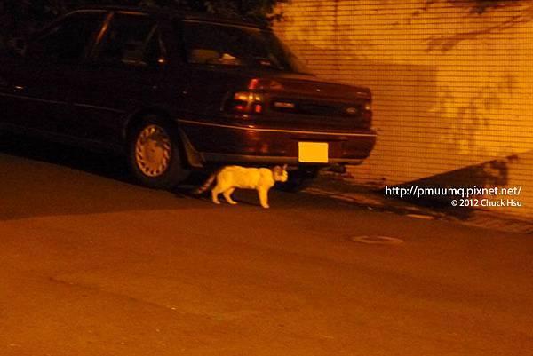 搶救街貓大作戰之台大懷生社抓貓TNR夜襲行動001