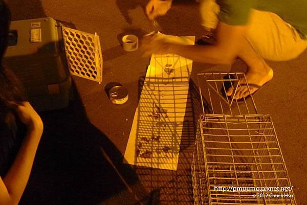 搶救街貓大作戰之台大懷生社抓貓TNR夜襲行動003