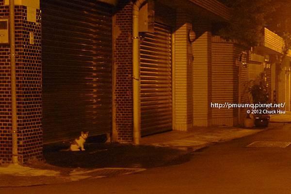 搶救街貓大作戰之台大懷生社抓貓TNR夜襲行動005