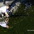 市府公園水池玩水的小朋友