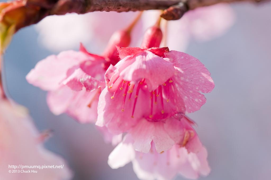 被噴水的花瓣 水乾了花瓣就會留下一點一點的斑點