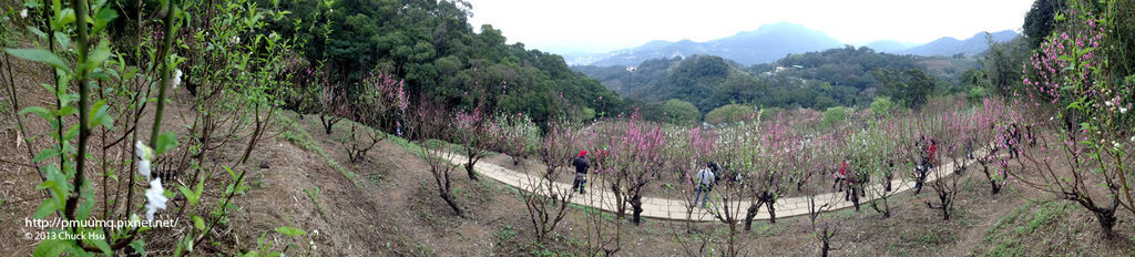 杏花林最頂端照張全景照
