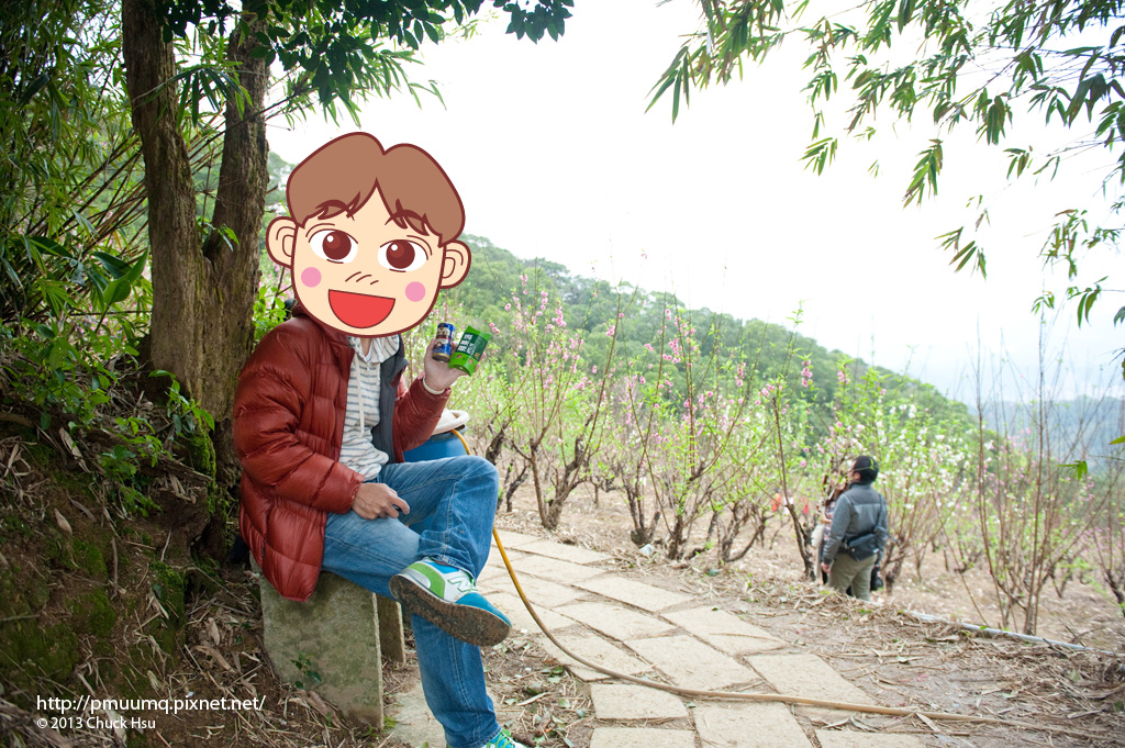 靜靜享受這片杏花林的下午茶 好愜意~