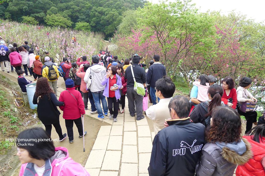 杏花林滿滿的人 這叫花開富貴