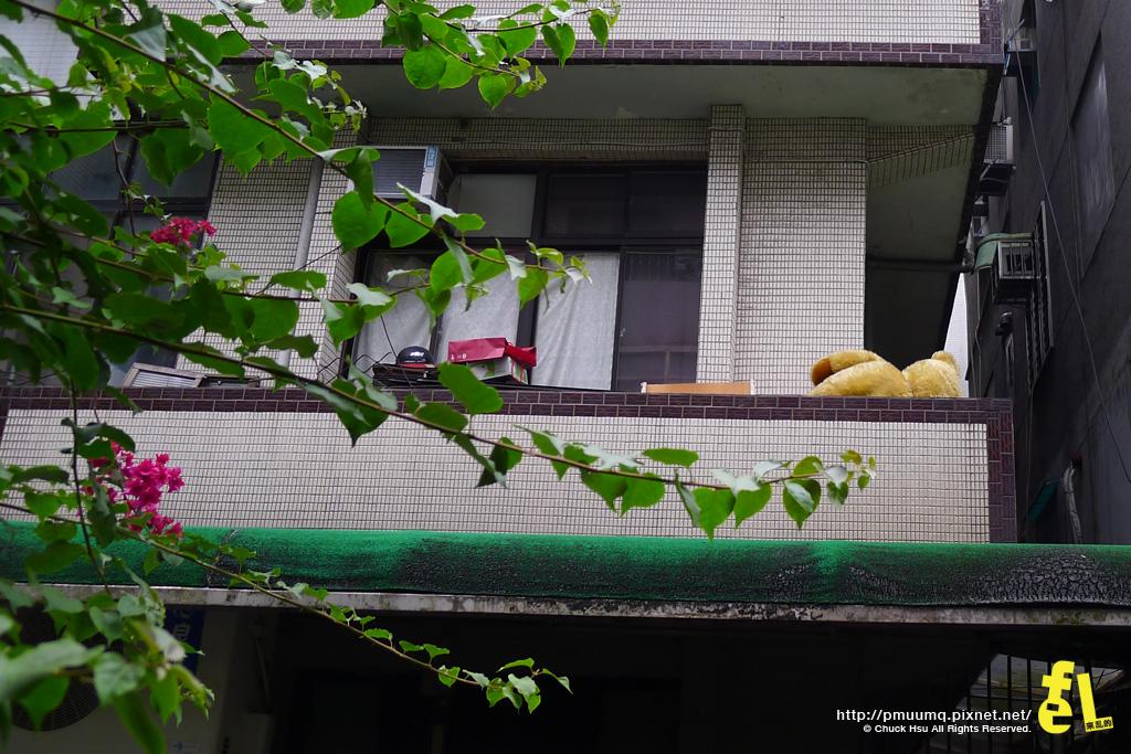 陽台的熊麻吉