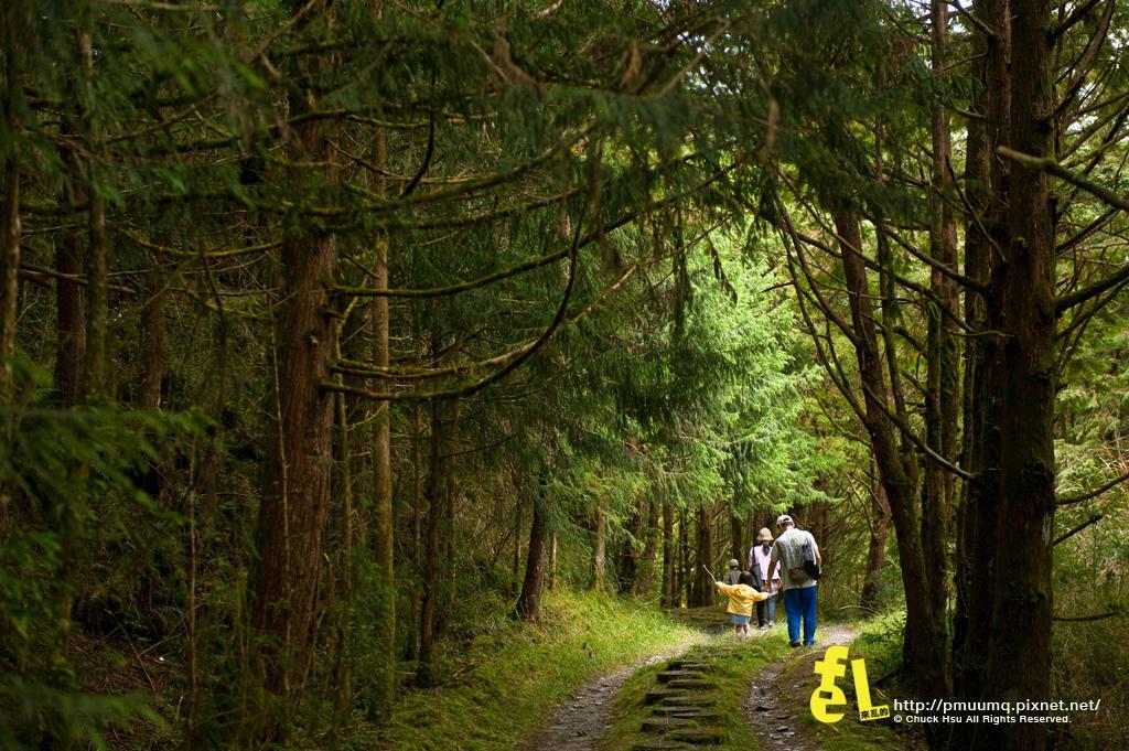 20131110深秋的太平山台灣山毛櫸國家步道散步趣_016.jpg