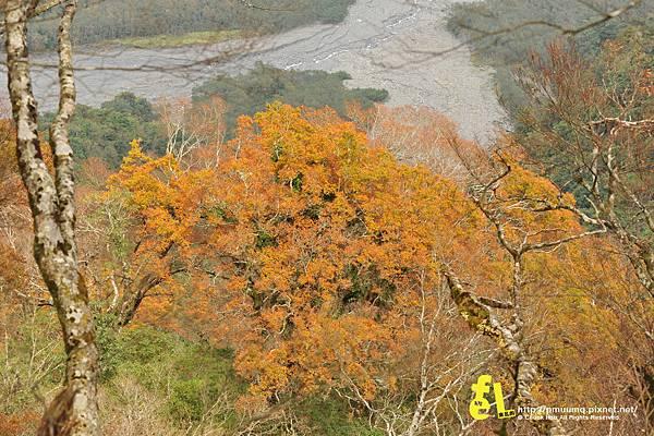 20131110深秋的太平山台灣山毛櫸國家步道散步趣_037.jpg