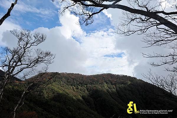 20131110深秋的太平山台灣山毛櫸國家步道散步趣_058.jpg