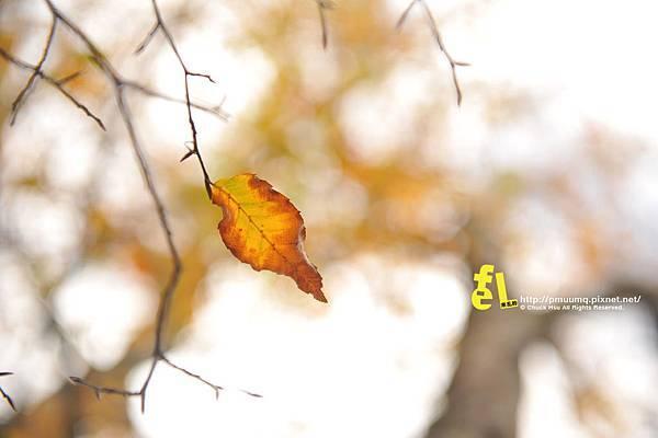 20131110深秋的太平山台灣山毛櫸國家步道散步趣_066.jpg