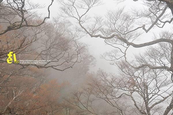 20131110深秋的太平山台灣山毛櫸國家步道散步趣_069.jpg