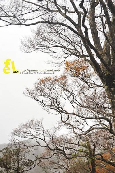 20131110深秋的太平山台灣山毛櫸國家步道散步趣_070.jpg