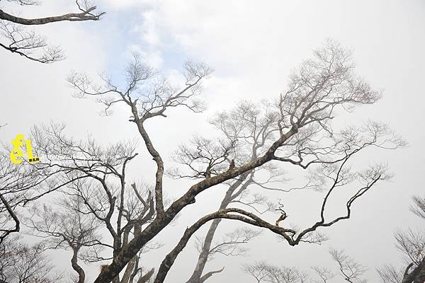 20131110深秋的太平山台灣山毛櫸國家步道散步趣_072.jpg