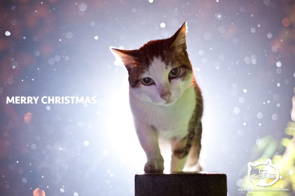 啾呆貓2013聖誕卡