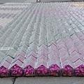 全球最大糖果彩毯之下雨了