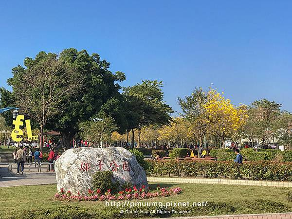 台中廍子公園-最美的黃花風鈴木公園_033