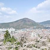 花漾釜慶鎮海賞櫻5日_023.jpg