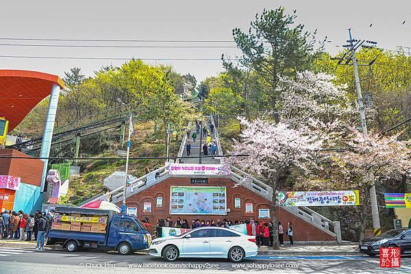0407花漾釜慶鎮海賞櫻-D3_164s.jpg