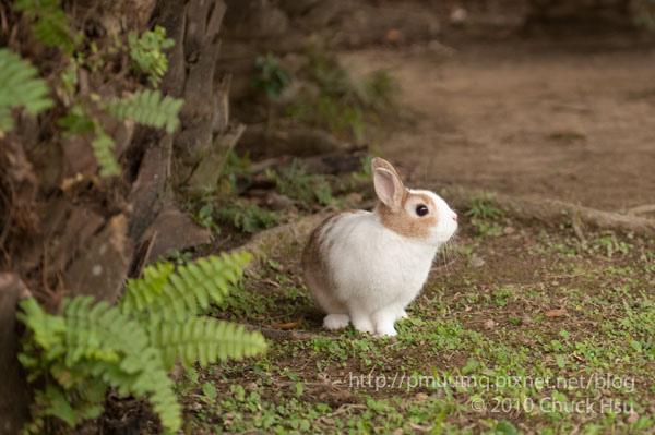 超可愛的兔子.jpg